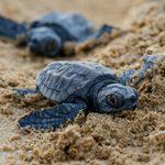 40 Precious Photos of Baby Turtles