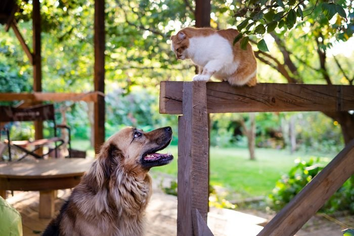 dog and cat looking at each other outdoors near a garden