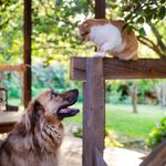 How to Keep Dogs and Cats Out of Your Garden