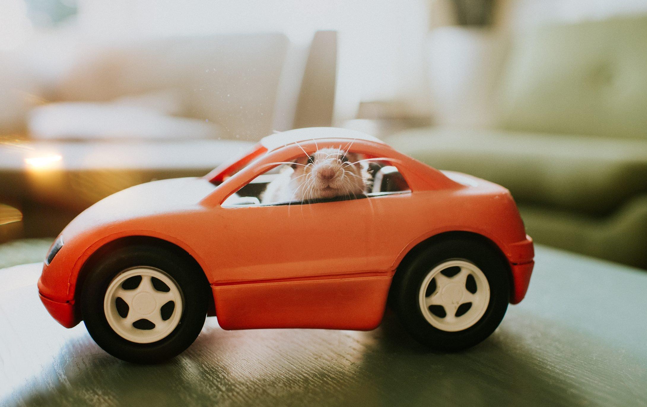 Hamster in a Car