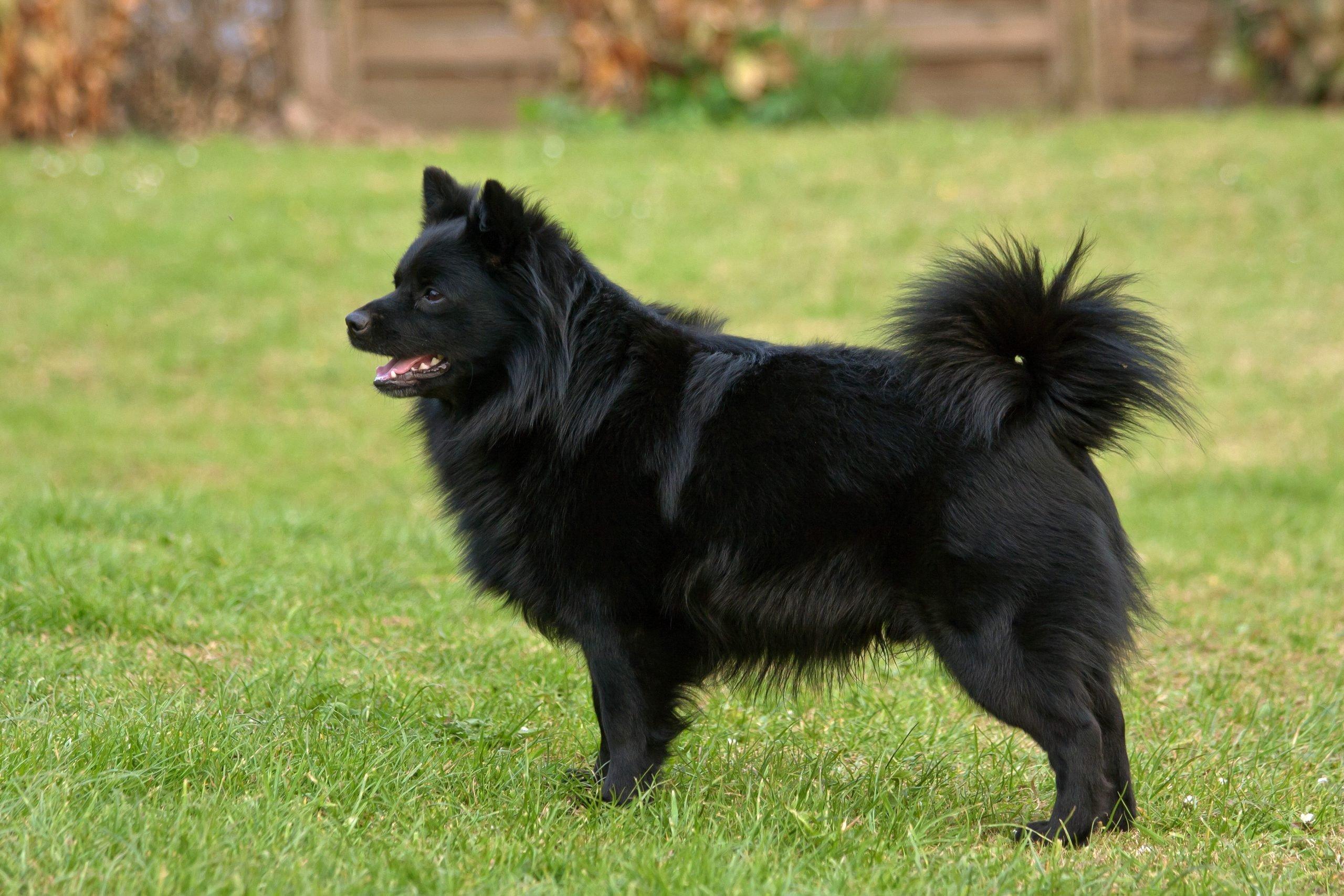 Black Dog On Grass