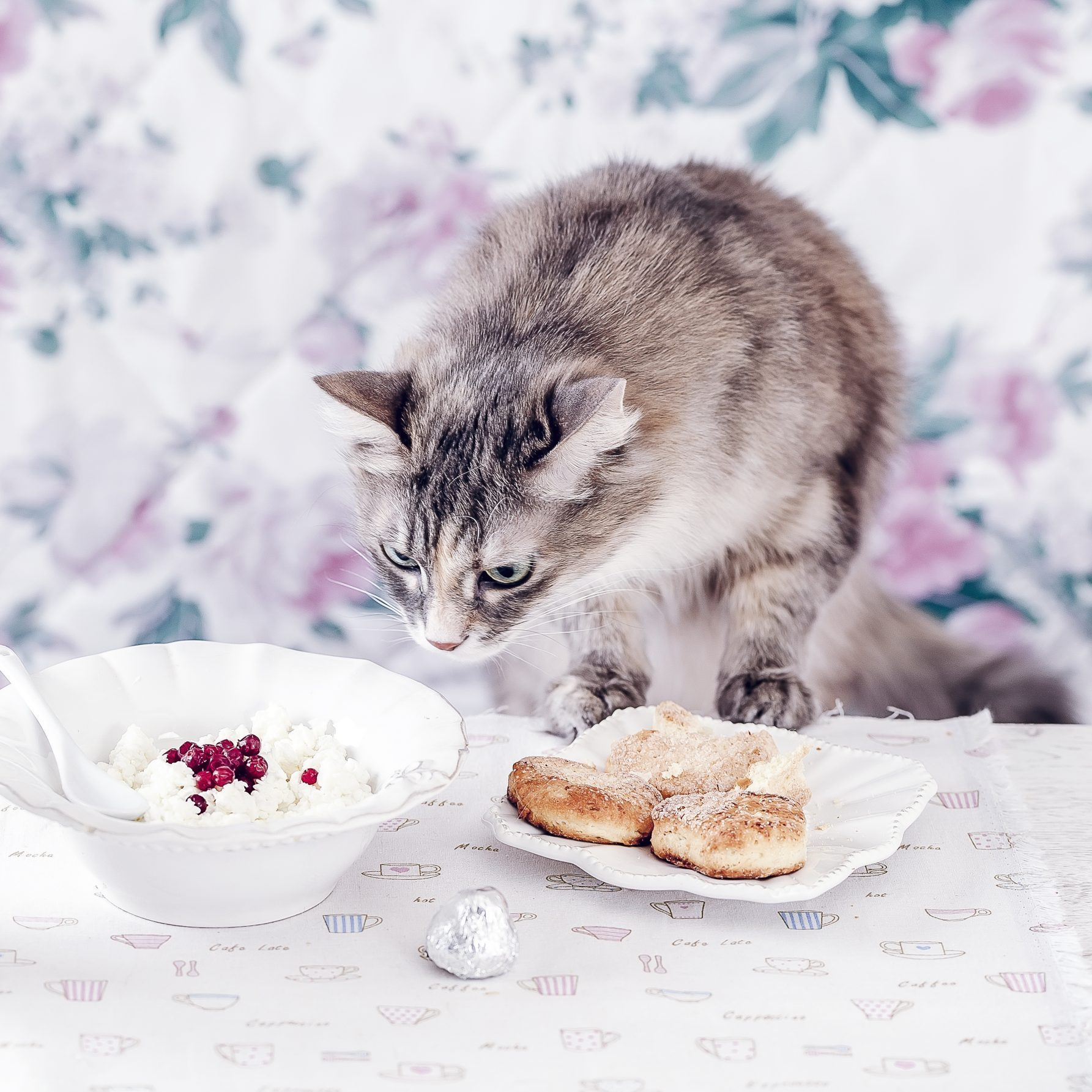 Gray Cat Breakfast on a table. Cat eats from white linen Table