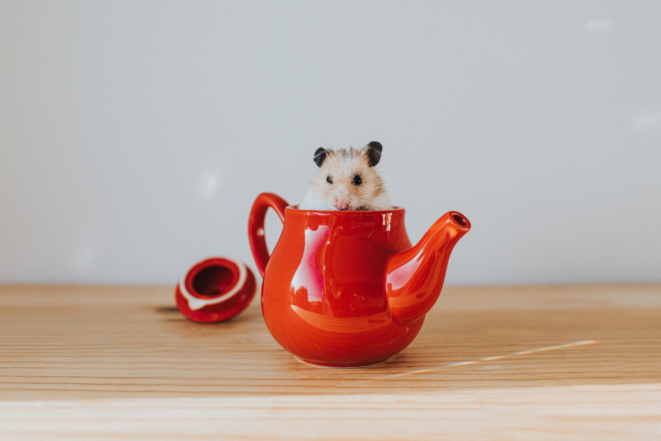Hamster in a Teapot