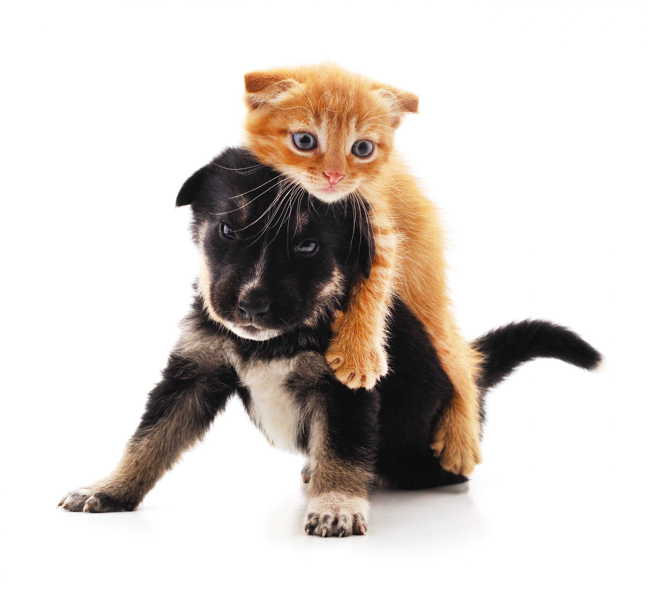Small cat and puppy.