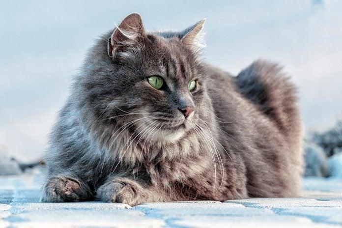 Close-up of cat sitting on snow