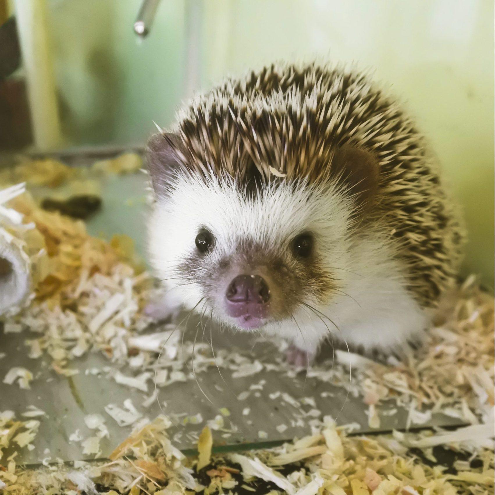 Mouth tumor hedgehog Hedgehog pathway