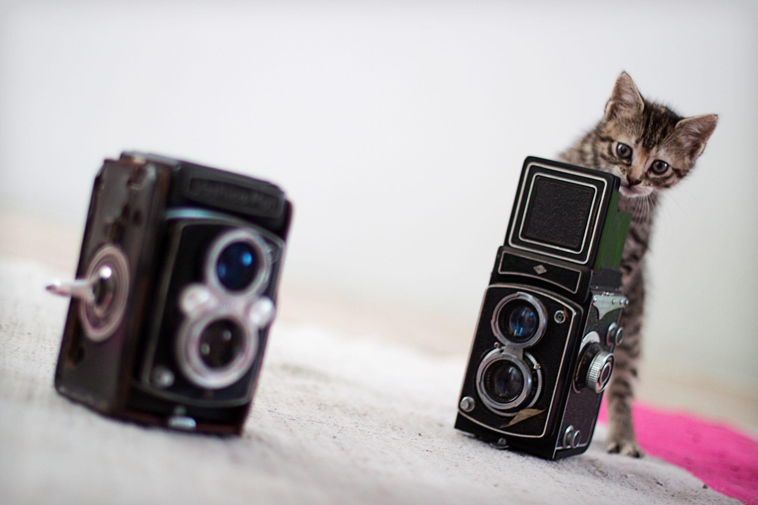 Kitten and vintage camera