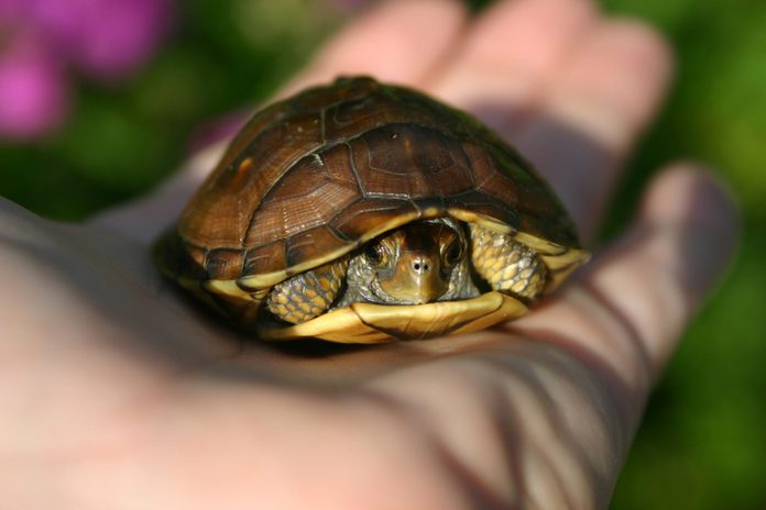 Turtle in the palm of my hand