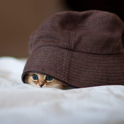 50 Cute Kitten Photos That Will Make You Melt