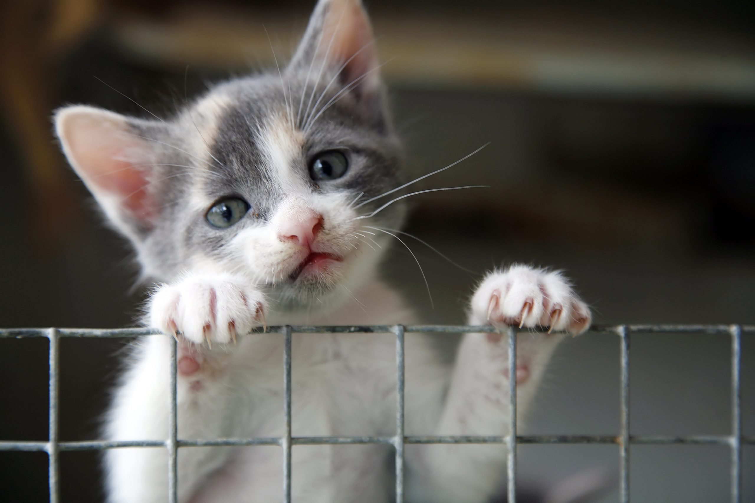 Sad looking kitten trying to climb over a wire fence