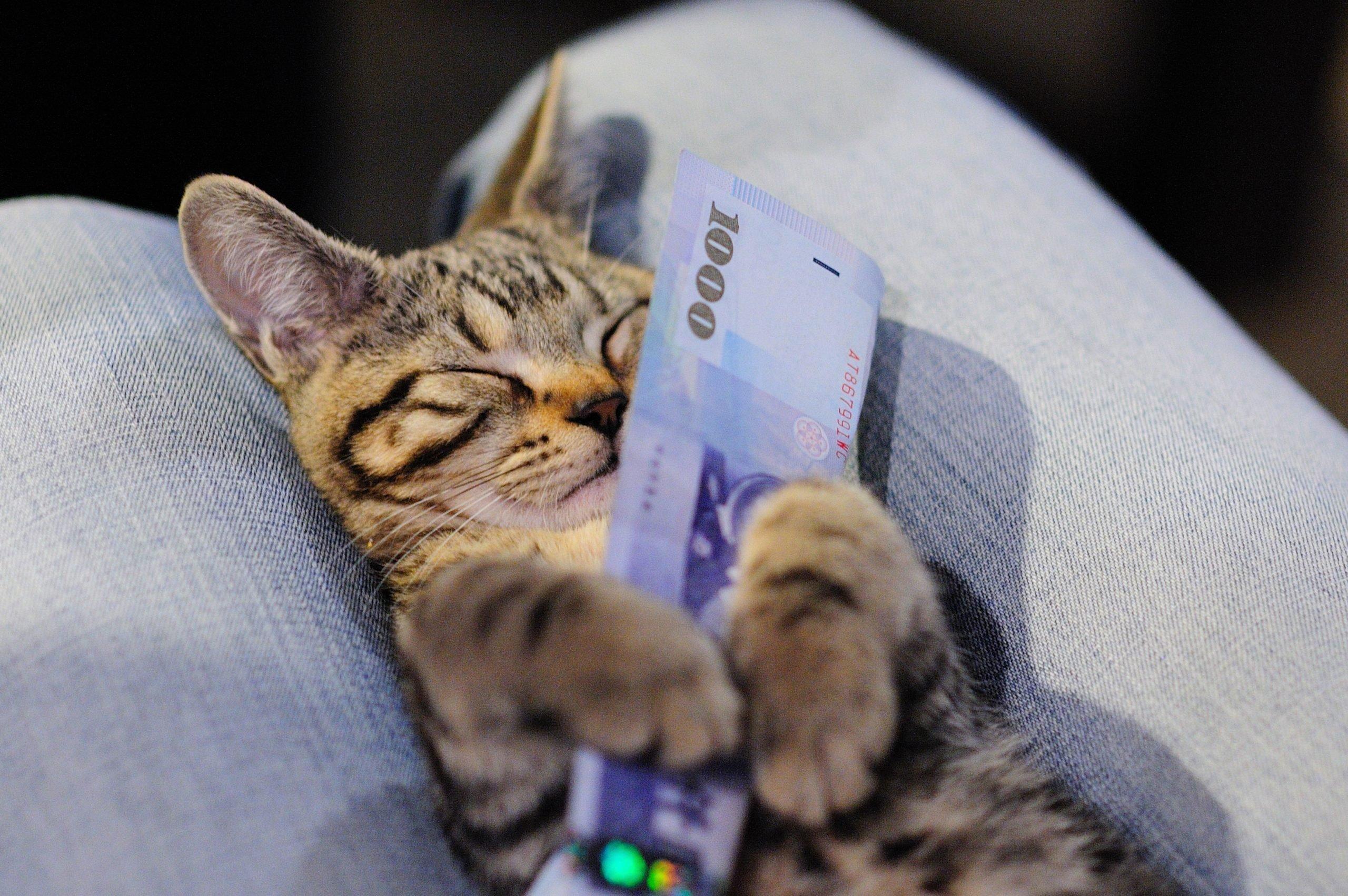 cash~ rich ~ Maneki-neko