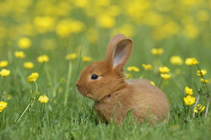 Baby rabbit in meadow