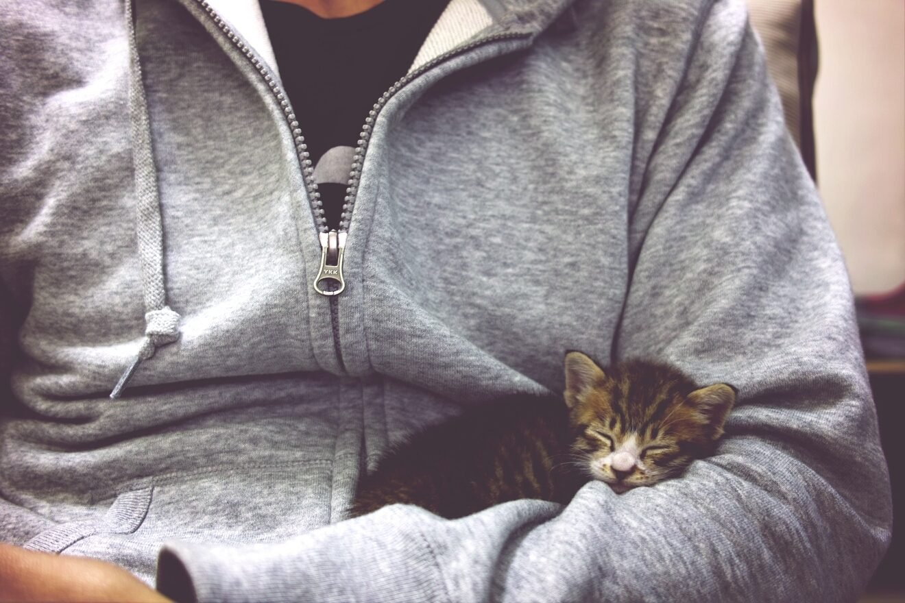 Close-up mid section of man with sleeping cat