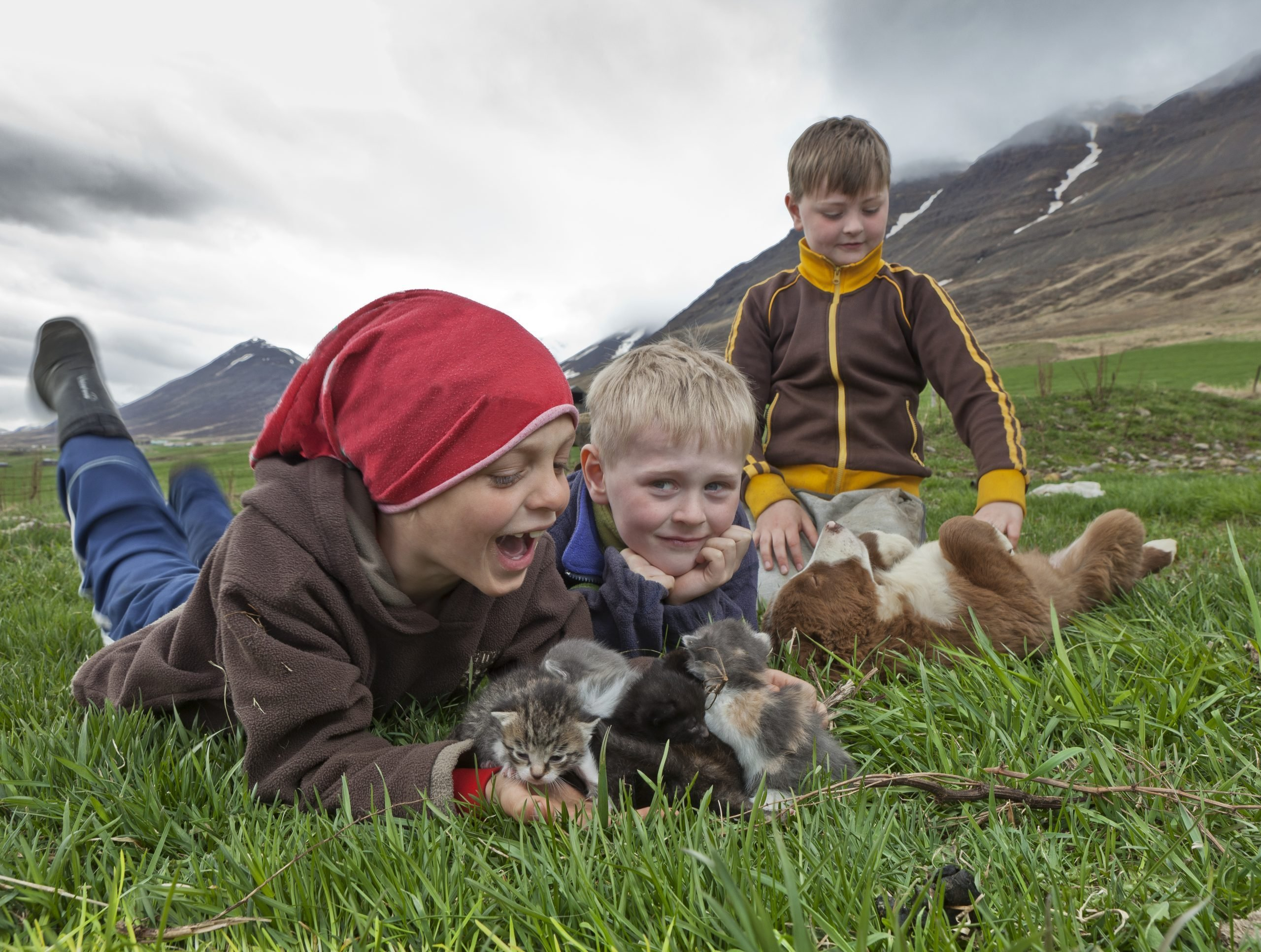 Boys with kittens and puppy on farm, Eyjafjordur, Iceland
