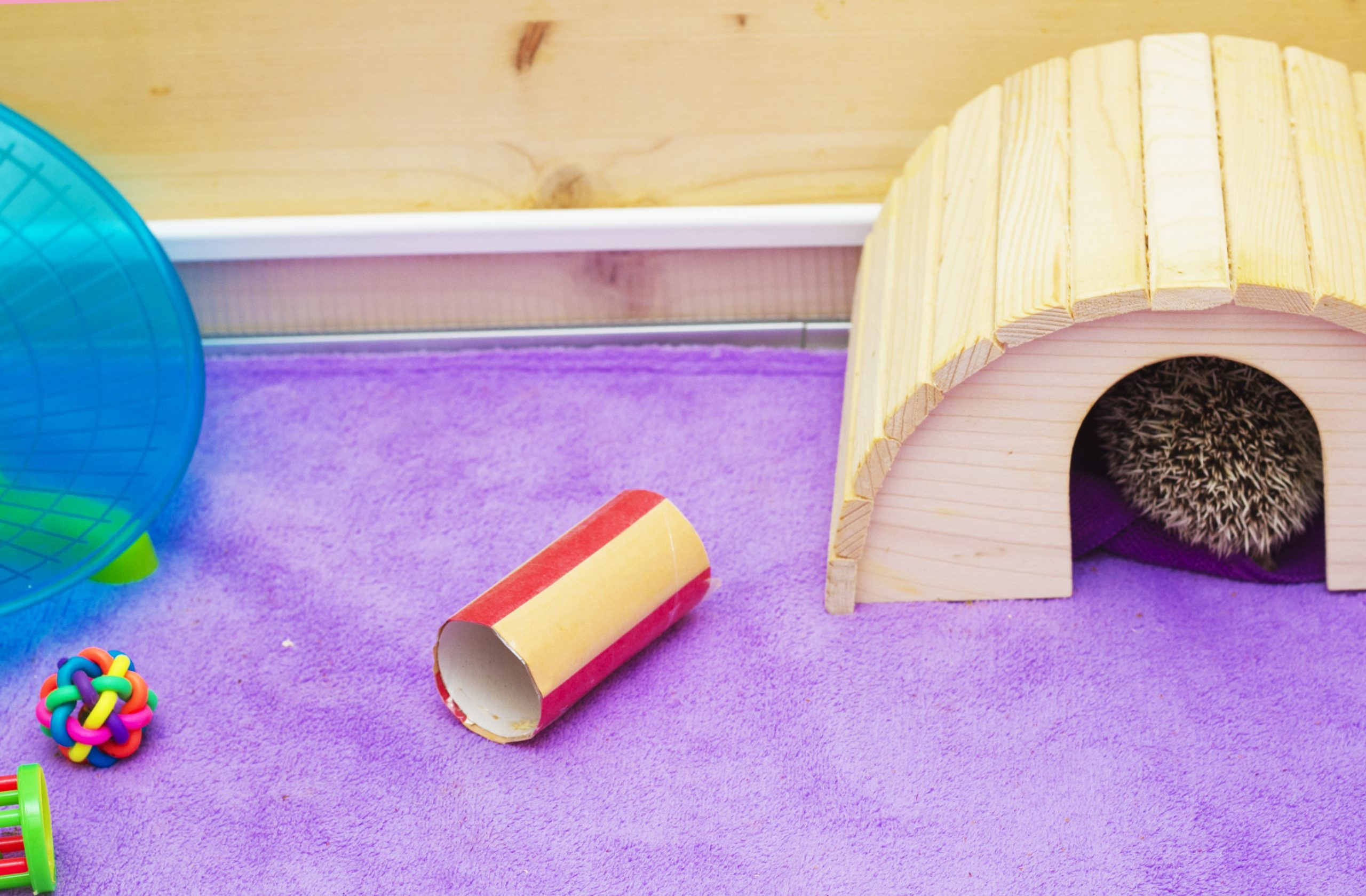 breeding facility for rodent hamster hedgehog mouse