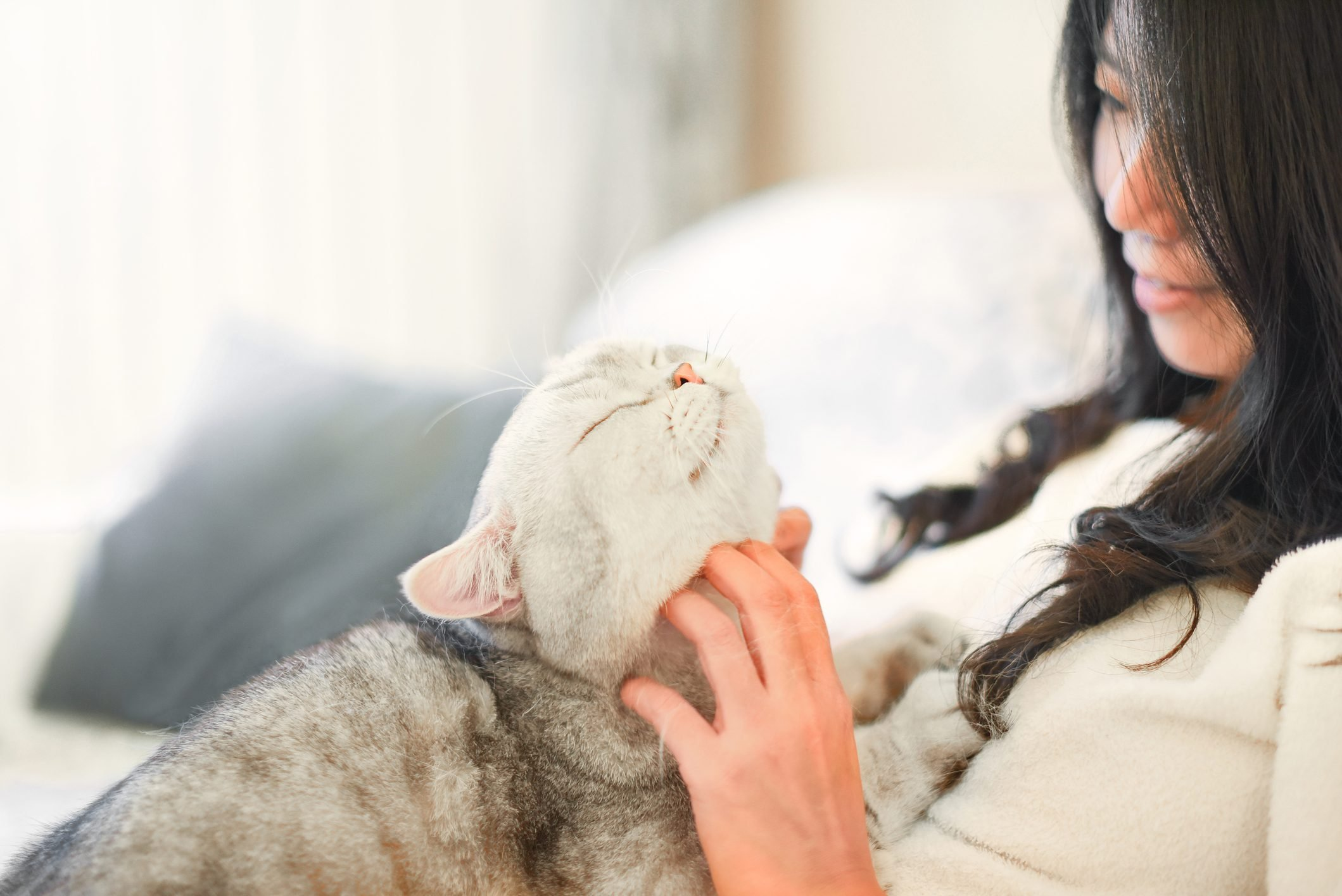 Young woman scratching cat on sofa