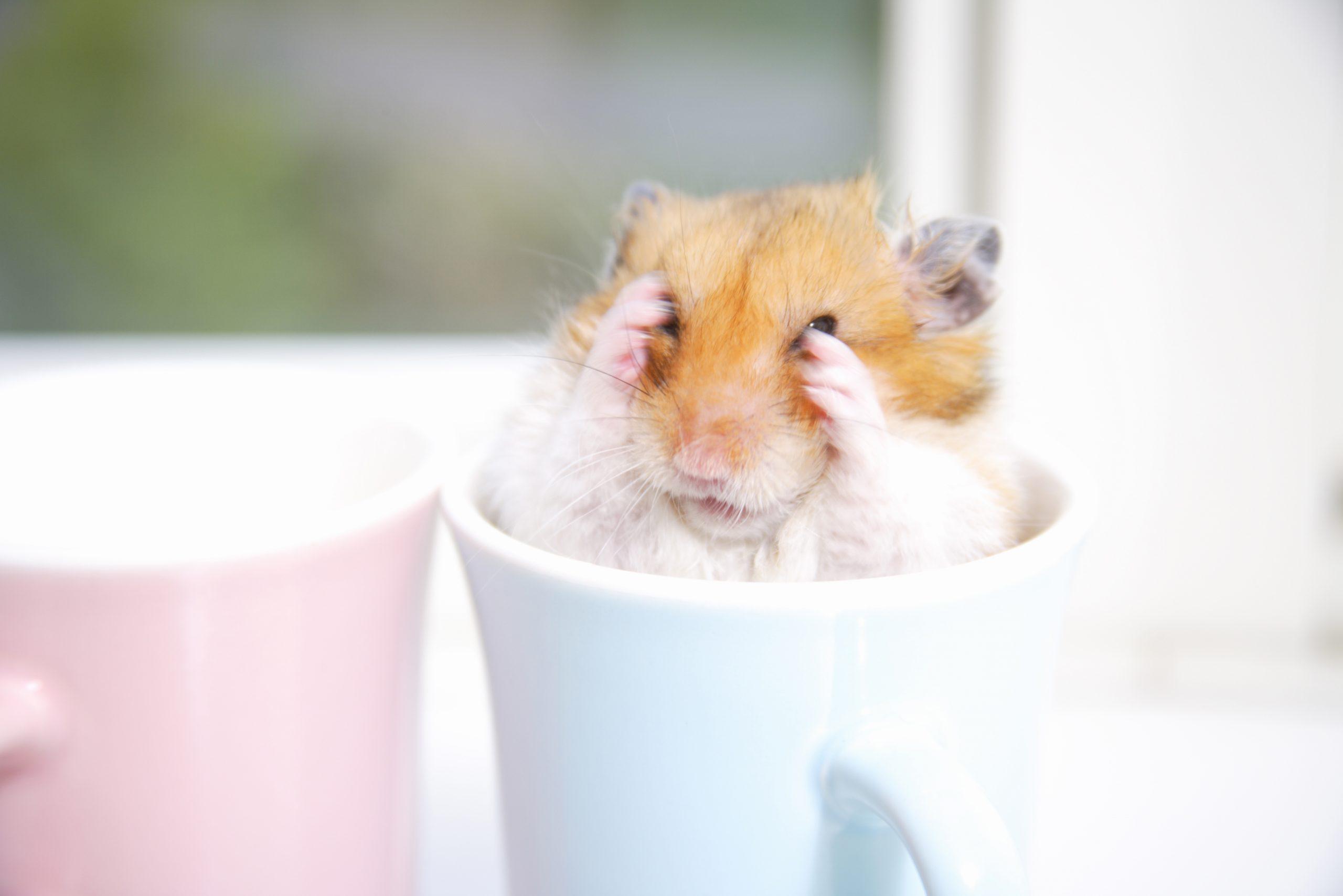 Hamsters in the mug