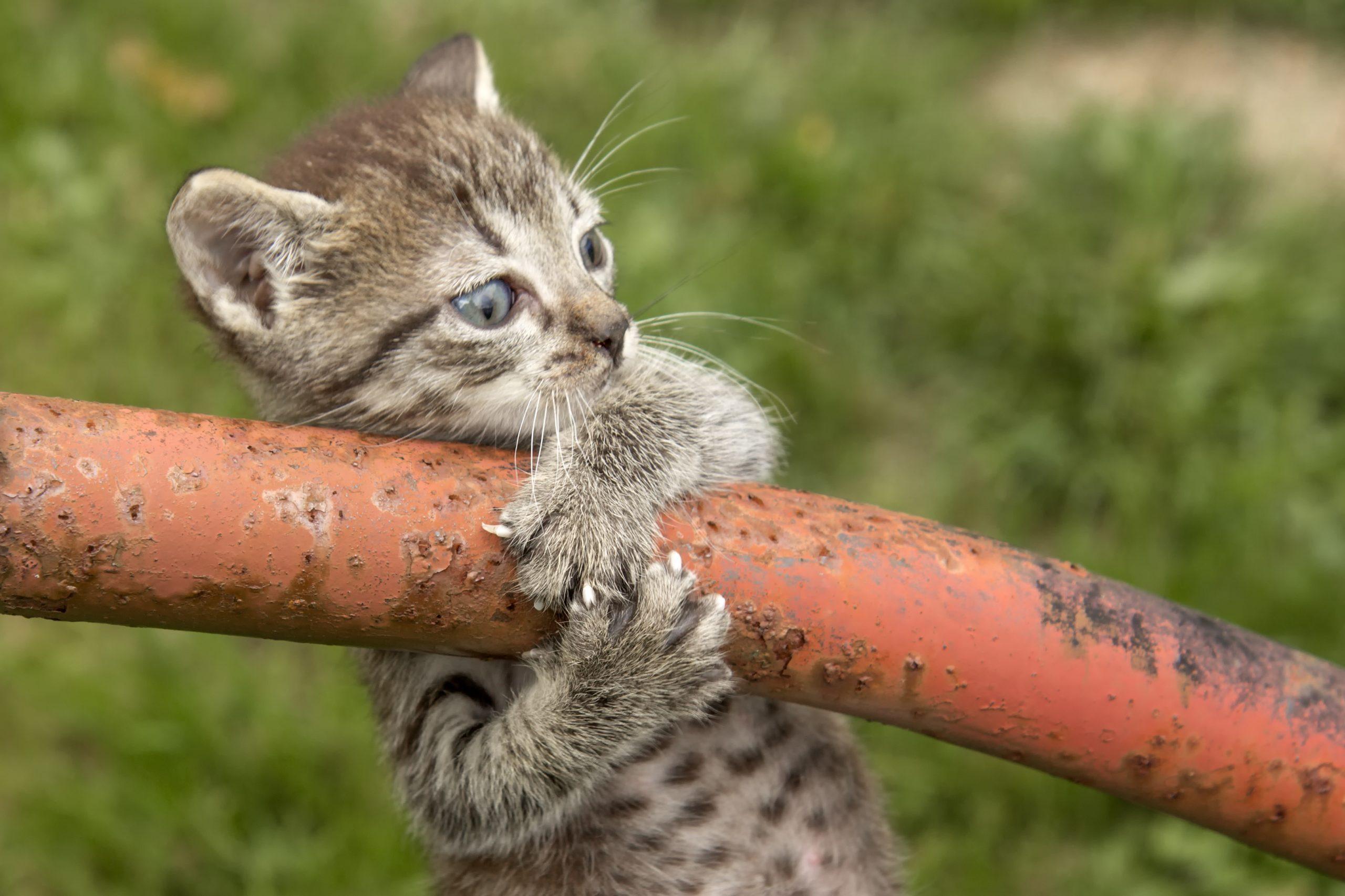 kitten with fear of falling
