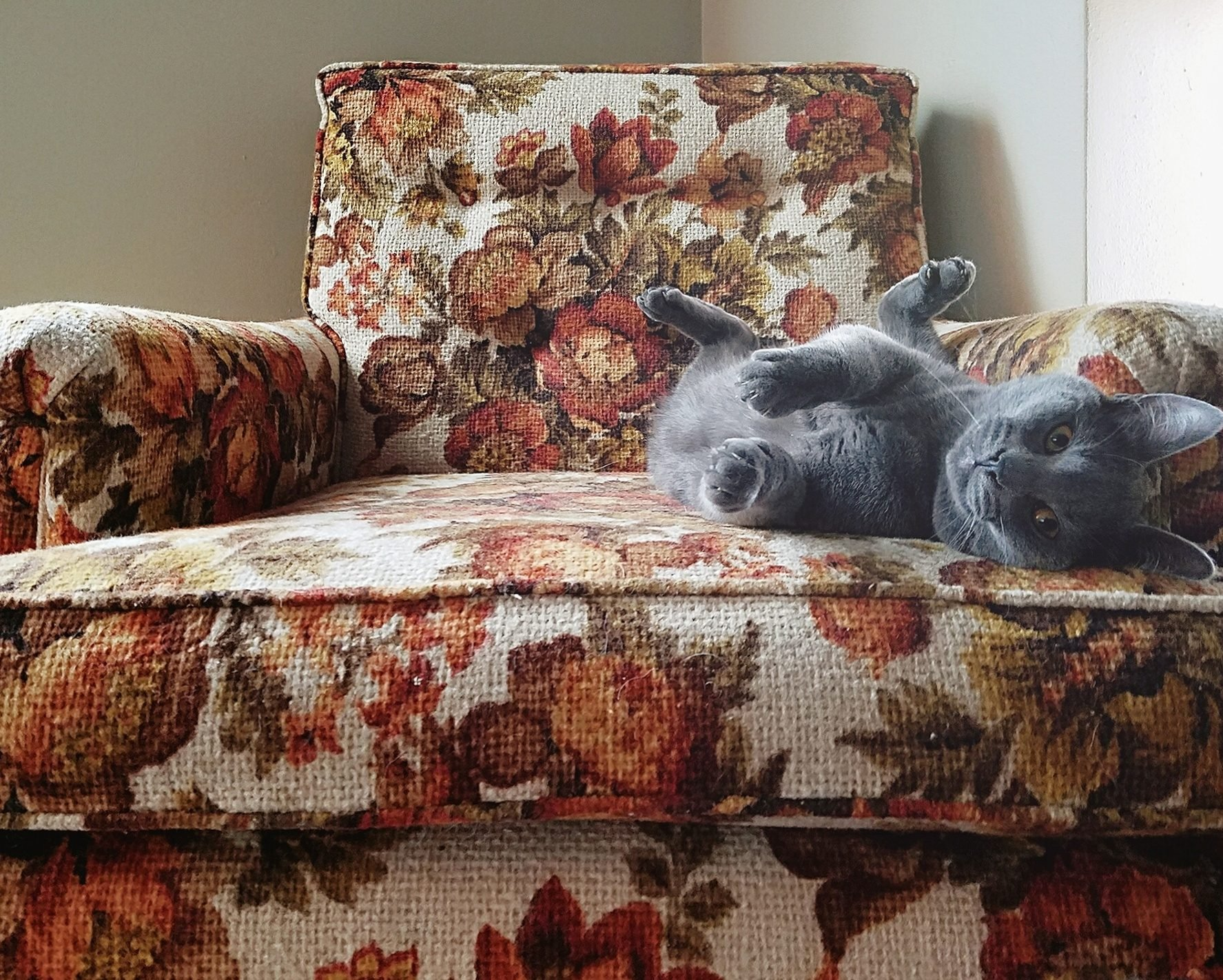 Portrait Of Cat Relaxing On Armchair At Home