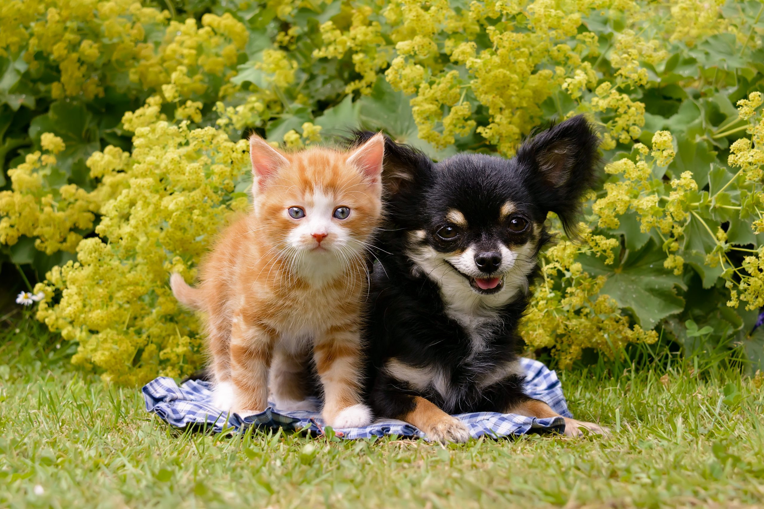 Portrait Of Kitten And Puppy On Grassy Field At Public Park