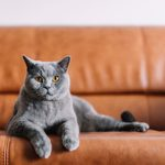 44 Cutest Cat Breeds You'll Want to Adopt