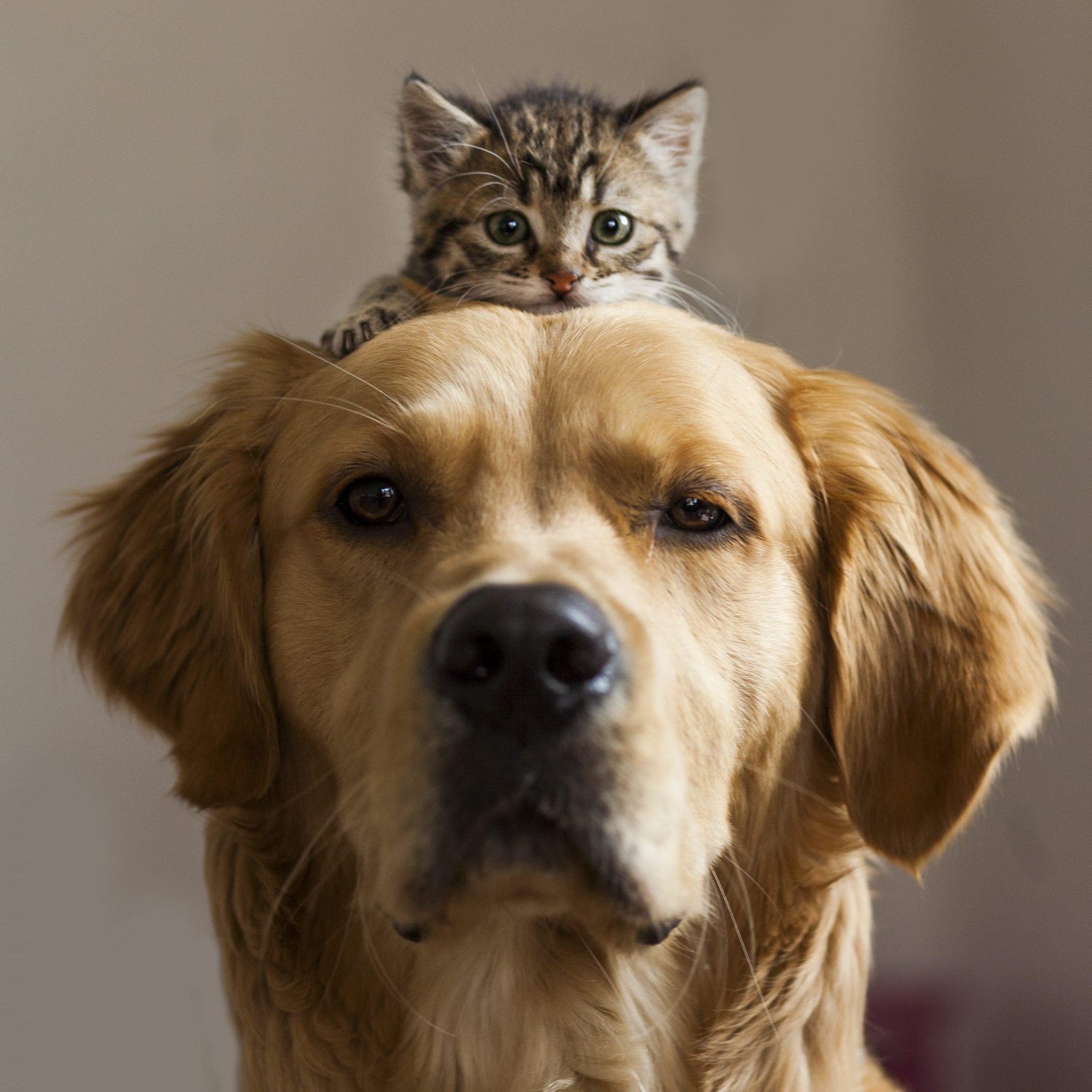 Kitten sitting on dog