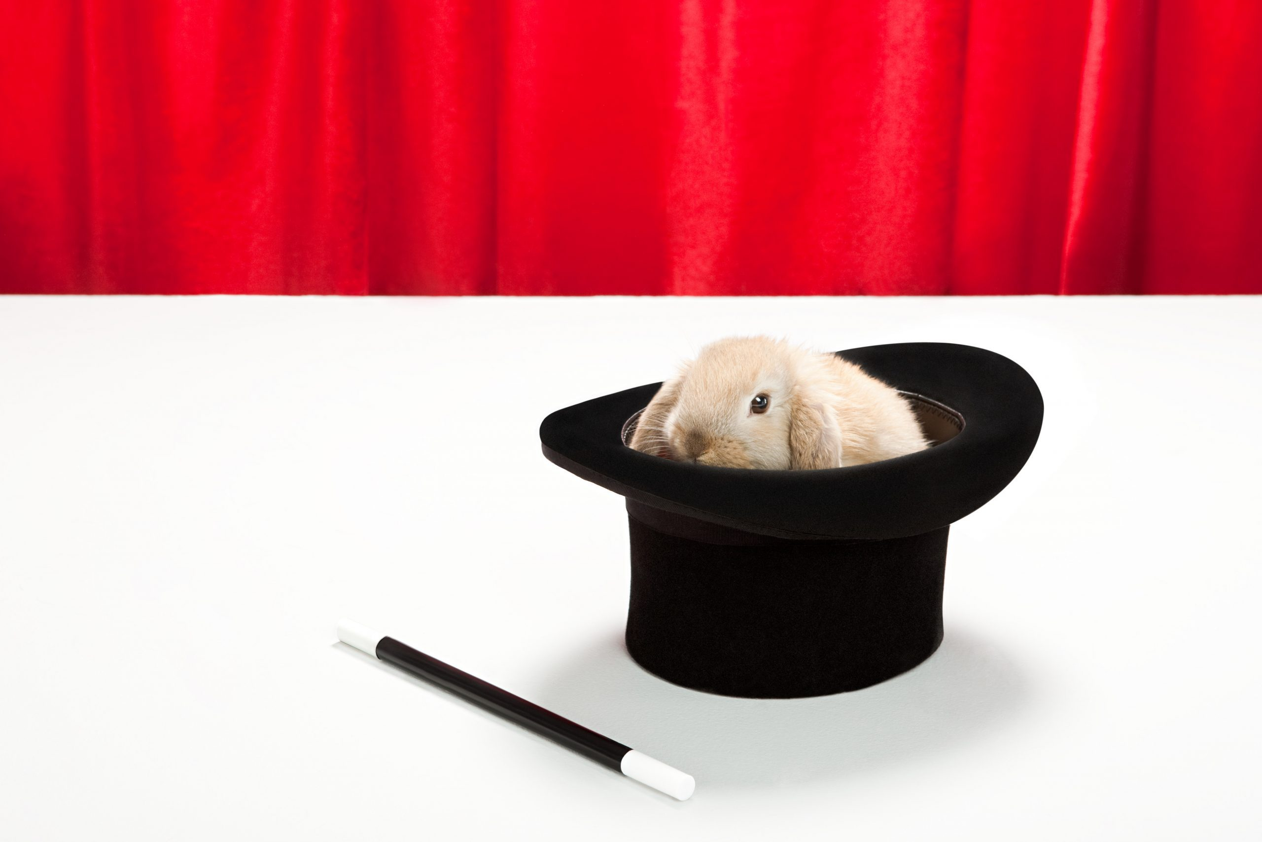Rabbit in top hat with magic wand