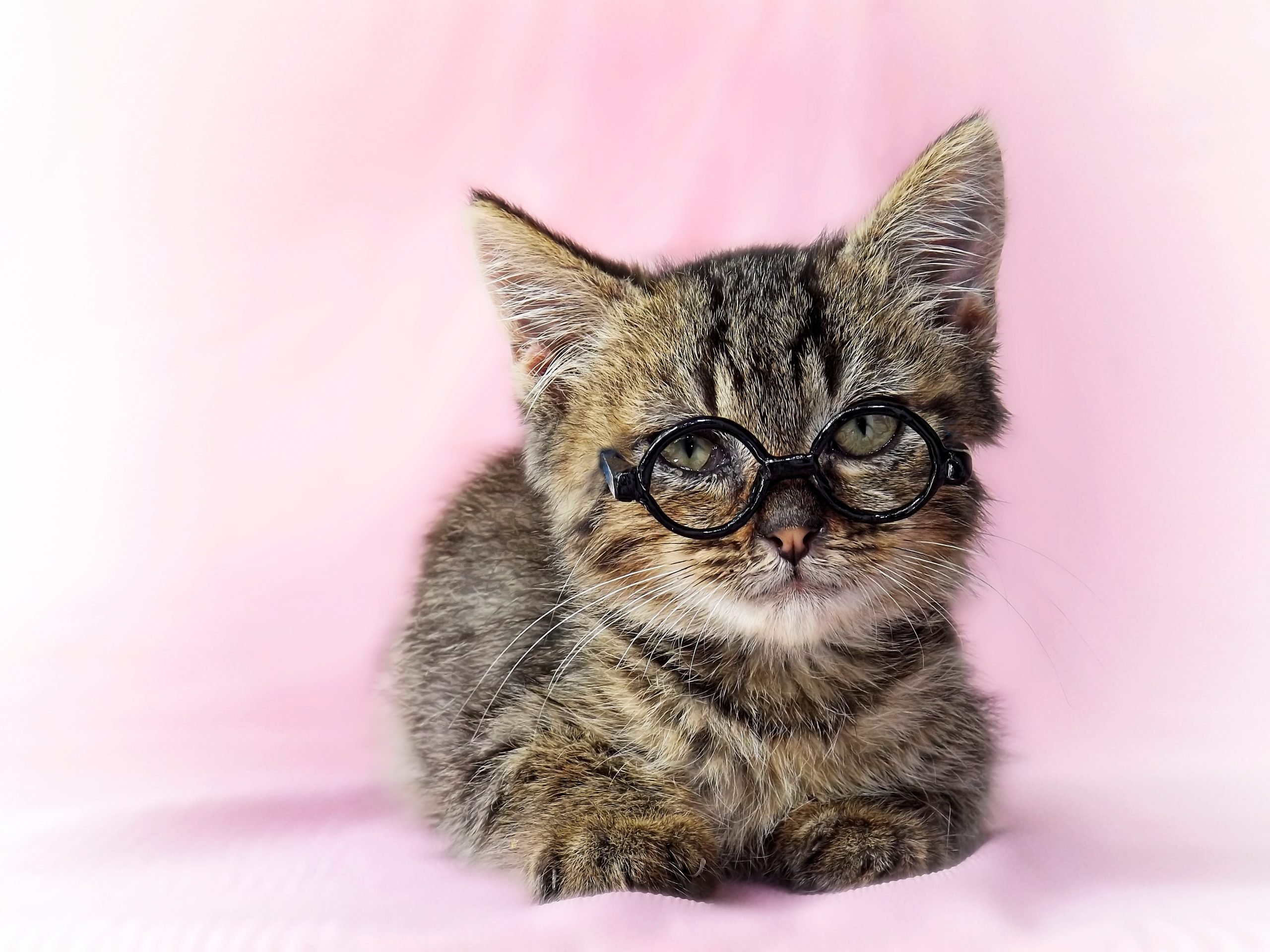 Portrait Of Kitten Wearing Eyeglasses While Sitting On Bed