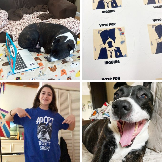 collage of Higgins with a laptop, vote for Higgins stickers, a student with Higgins on a tshirt, and a happy Higgins on the couch