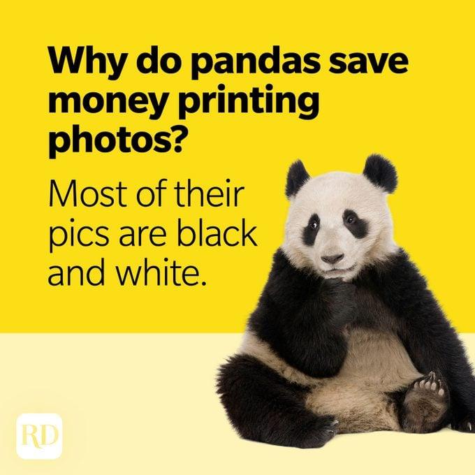 Bear Puns Panda Photos
