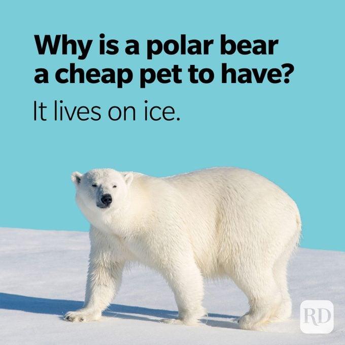 Bear Puns Polar Bear Cheap Pet