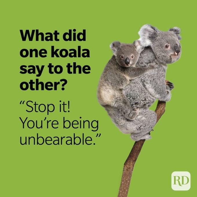 Bear Puns Unbearable Koala