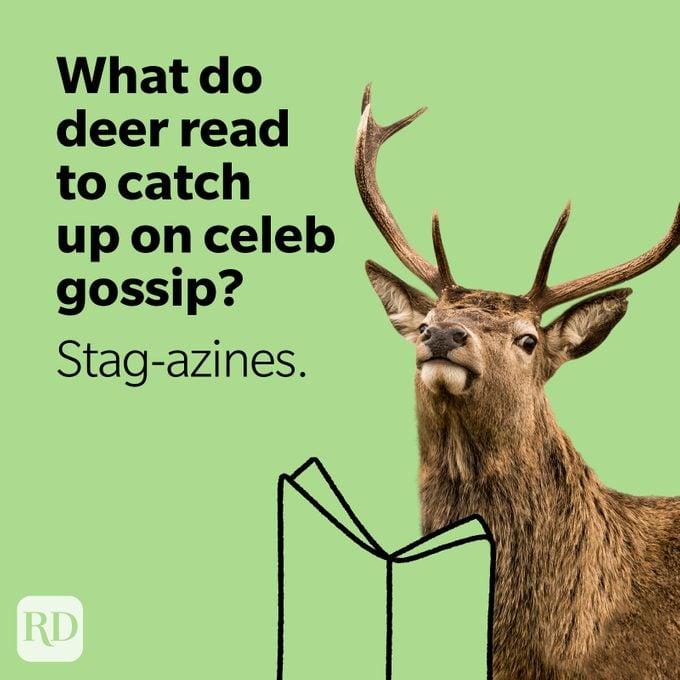 Stag reading magazine