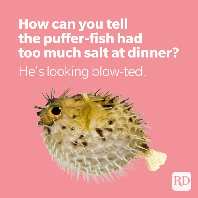 Puffer fish with joke