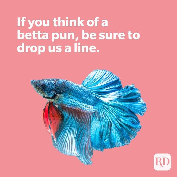 Blue betta fish with betta pun