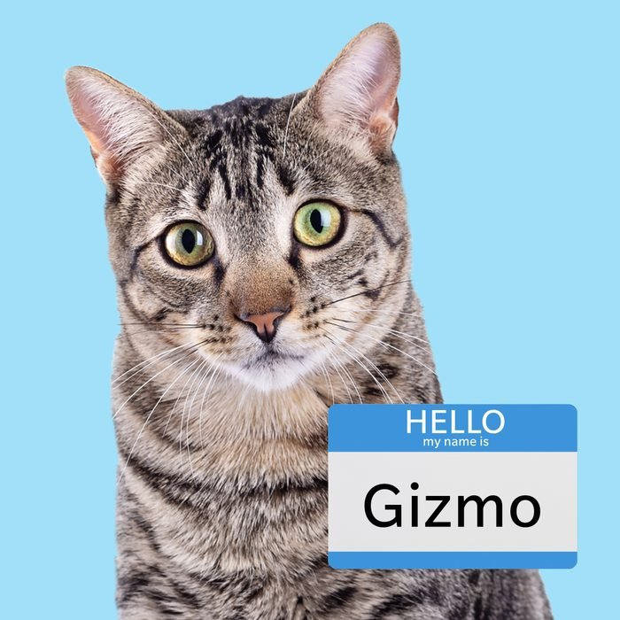Gizmo, a purrfect boy cat name