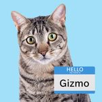 100 Boy Cat Names That Are Simply Purr-Fect