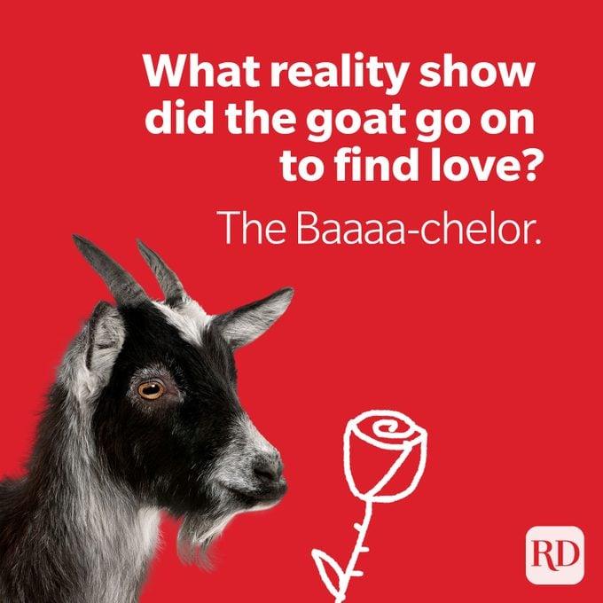 Bachelor goat holding final rose