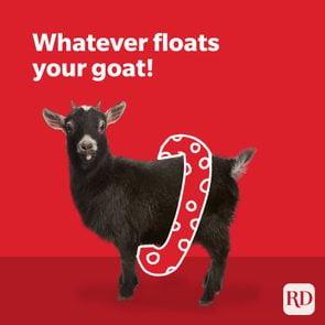 Goat wearing floaties