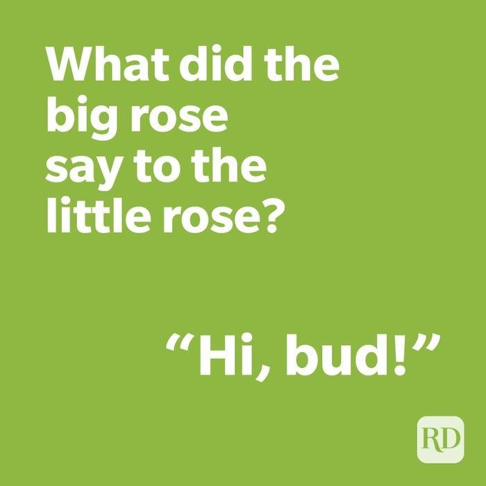 Rose joke on green