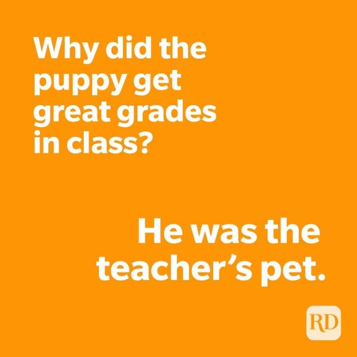 Puppy joke