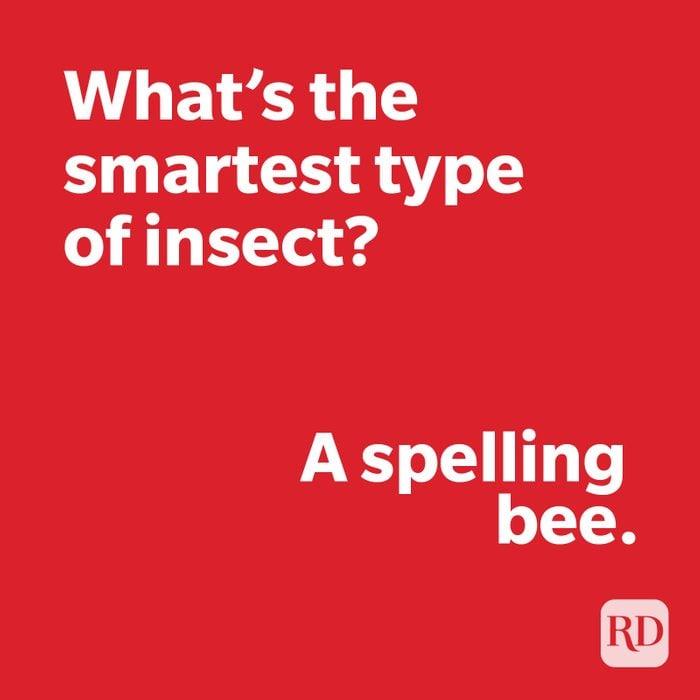 Insect joke