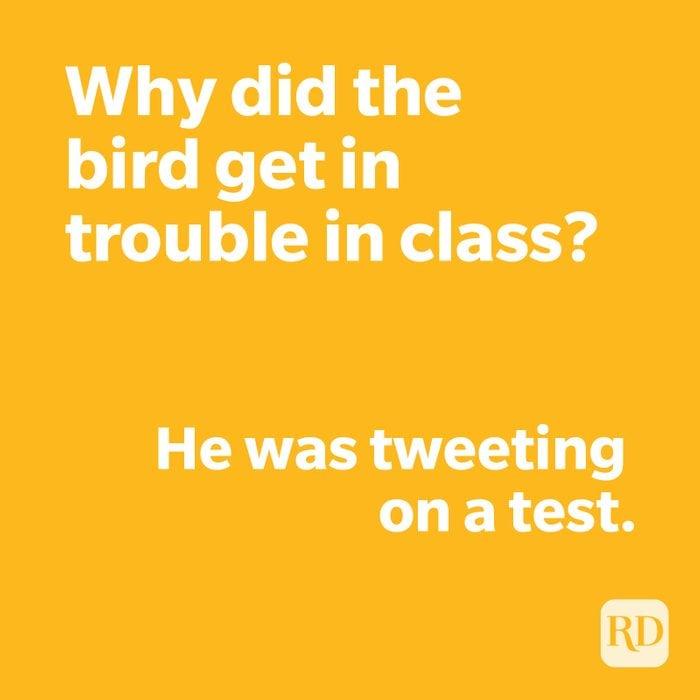 Bird joke