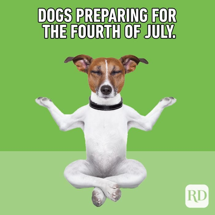 Image: dog meditating Meme text: Dogs preparing for the Fourth of July.
