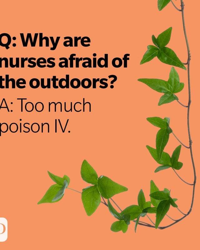 Poison ivy vine on orange background