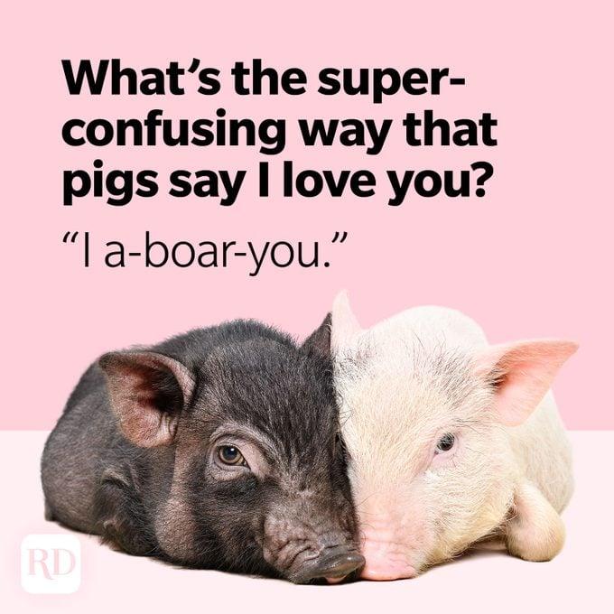 Pig Puns I A Boar You