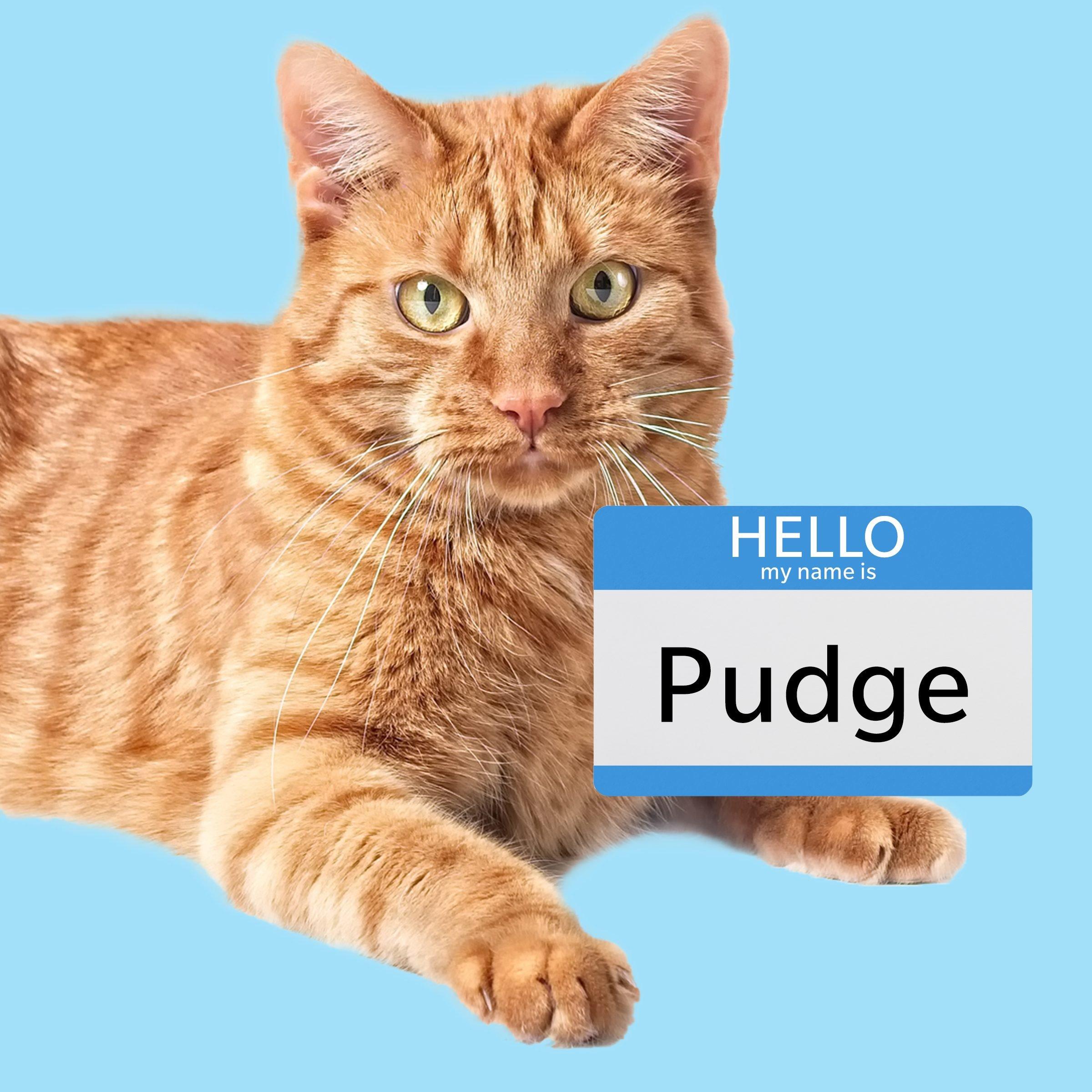 Pudge, a unique boy cat name