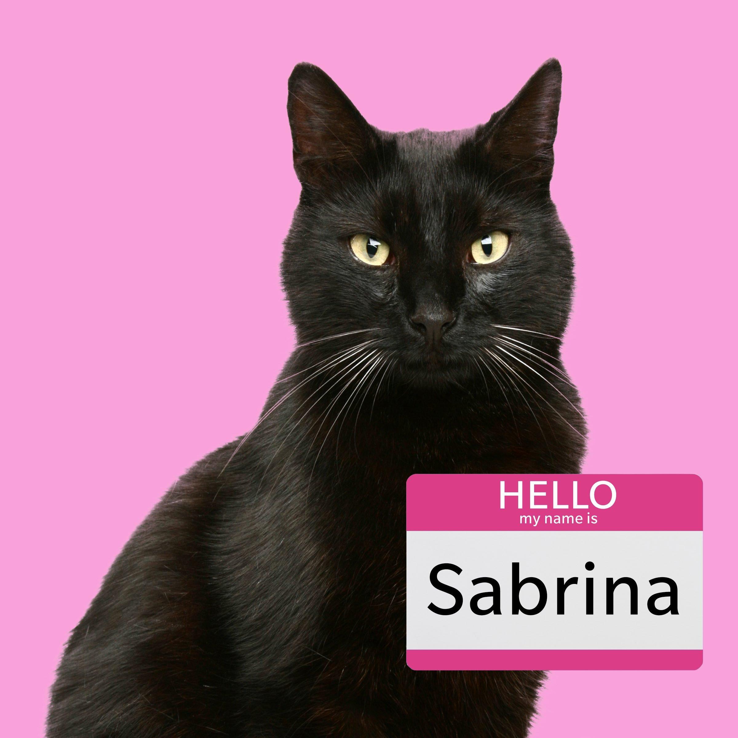 Sabrina, a girl cat name for a black cat