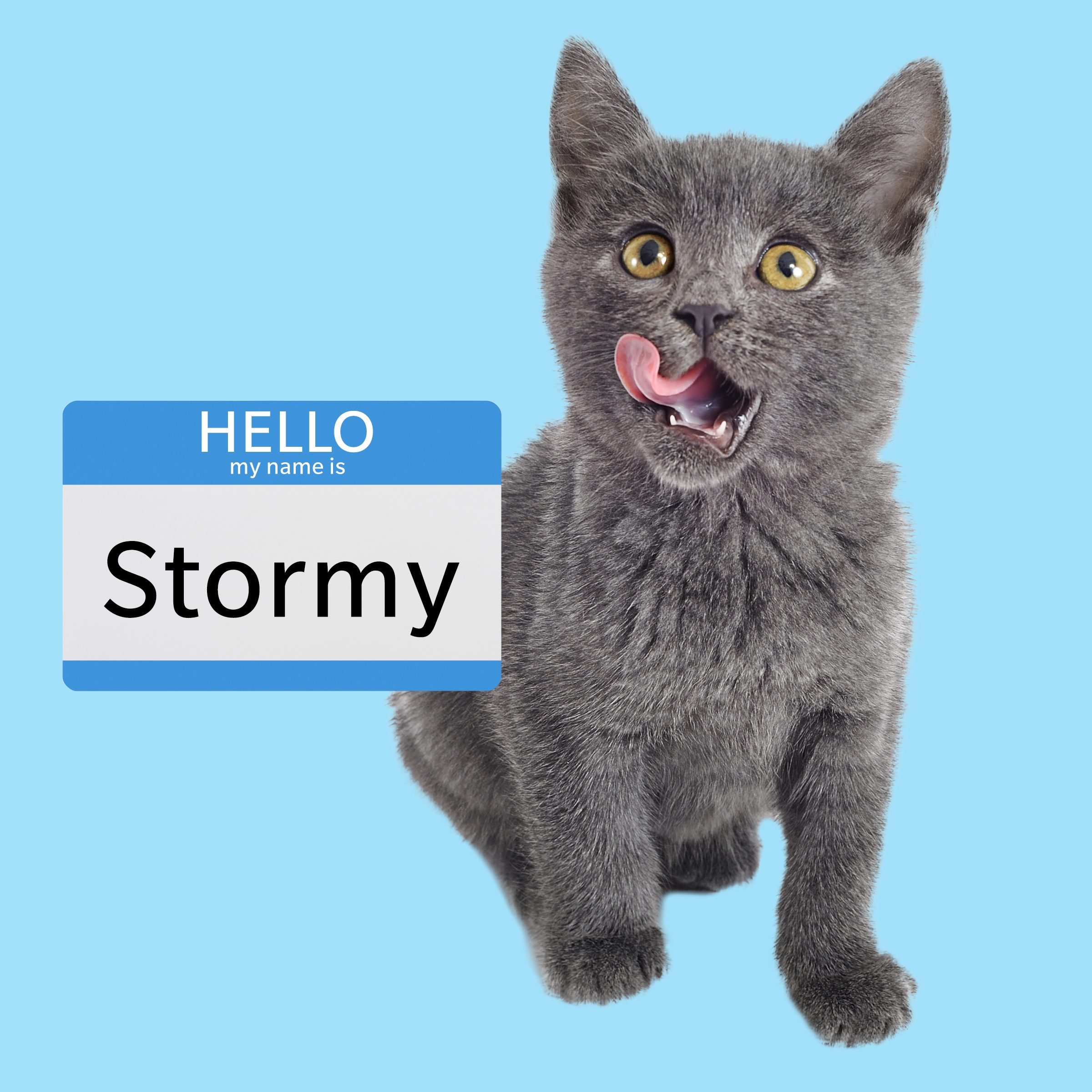 Stormy, a boy cat name for a grey cat