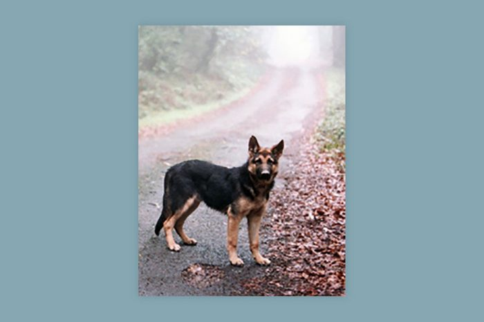 dog standing on the edge of a foggy road in autumn